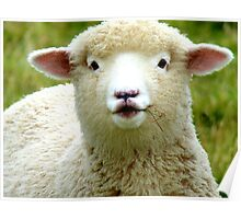 Oooh! La La... - Baby Lamb - Sheep - NZ Poster