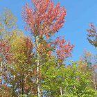 Autumn Sky by resada