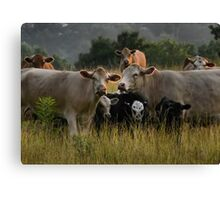Freaky Cow II Canvas Print