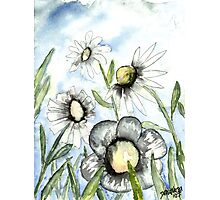 field of white daisy flowers daisies Photographic Print