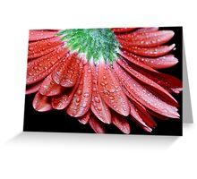 Red Gerbera Flower Greeting Card