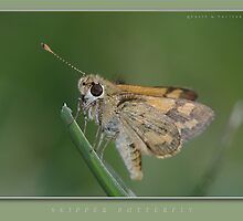 Skipper at rest by dpastern