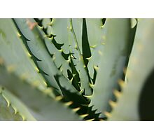 Aloe Photographic Print