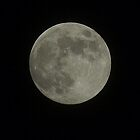 Full Moon by Moxy