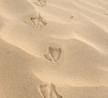 Footsteps by Brent Anderson