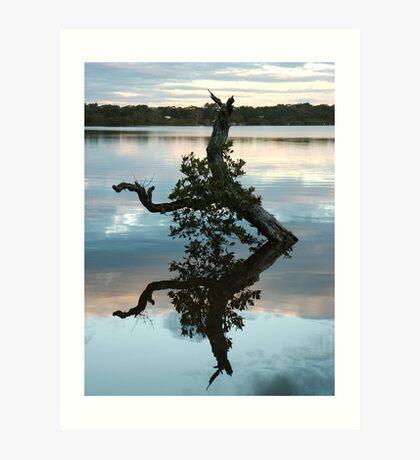 Mangrove Tree Reflection Art Print