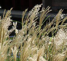 Sparkle Grass by coffeebean