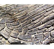 Timber Texture Photographic Print