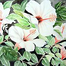 Hibiscus by Ilunia Felczer