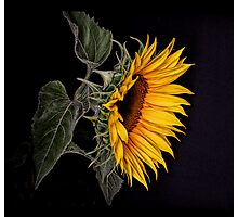 Mellow Yellow Photographic Print