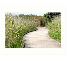 Wetlands Path. Art Print