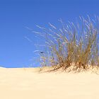 Dune grass by Willem Dickson de Villiers