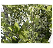 Mistletoe With Berries Poster