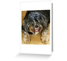 Pooped!  Greeting Card
