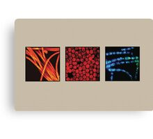 Photosynthetic bacteria compilation Canvas Print