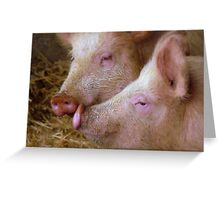 Hey Babe! Pigs - Mosburn Southland NZ Greeting Card