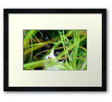 Peekaboo! Spike Kitten - Southland New Zealand Framed Print