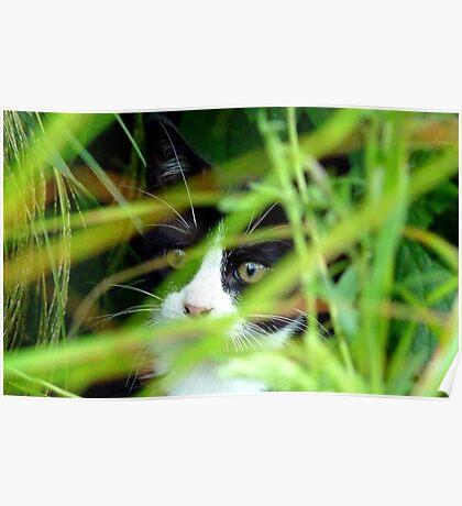Peekaboo! Spike Kitten - Southland New Zealand Poster