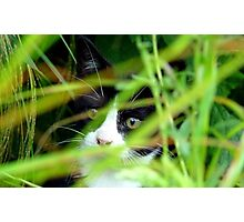 Peekaboo! Spike Kitten - Southland New Zealand Photographic Print