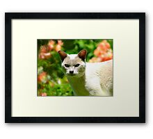 Have You Seen A Duckling? - Cat - NZ Framed Print