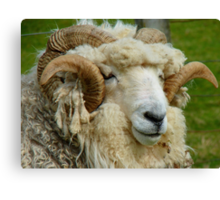 WHAT!!...Sorry Can't Hear With These Noise Cancelling Headphones...Drysdale Ram - NZ Canvas Print