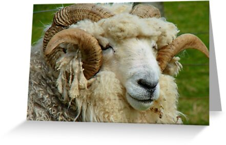 WHAT!!...Sorry Can't Hear With These Noise Cancelling Headphones...Drysdale Ram - NZ by AndreaEL