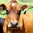 Anyone Seen My Jersey? - Dairy Cow - NZ by AndreaEL