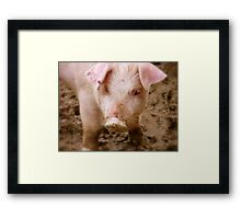Oh No Mum.. I Didn't Have Any Curds And Whey This Morning!! - Baby Piglet - NZ Framed Print