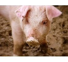 Oh No Mum.. I Didn't Have Any Curds And Whey This Morning!! - Baby Piglet - NZ Photographic Print