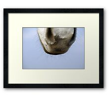 Horse nose Framed Print