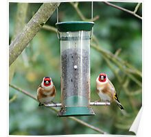 A Charm of Goldfinches Poster