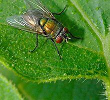 Green Fly by Aussiebluey