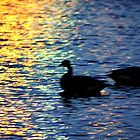 Geese on the Water by DeeZ (D L Honeycutt)