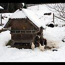Hen house by Jörg Holtermann