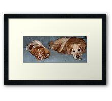 Patience x 2 Framed Print