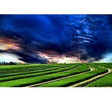 Fields Of Grain Photographic Print