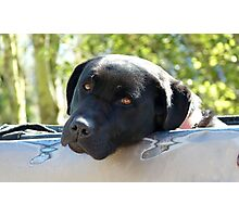Black Beauty's Got Nothing On Me Mate!!...Black Labrador - NZ Dog Photographic Print