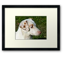 I'll Stay Focused On That!!! - Cute Pup - NZ Framed Print