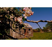 The lonely Apple Tree! - Old House - NZ - Southalnd Photographic Print