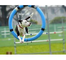 Hey...I Can Fly Through Hoops!!! - Flygility - NZ Photographic Print