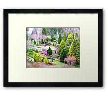 A Glympse Of Fairy Land ... Conifers Maple Glen - NZ Framed Print