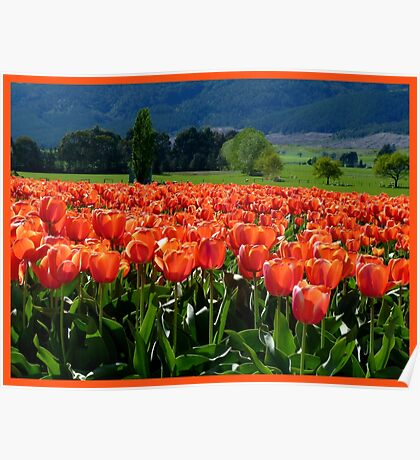Natures Glorious Tulips! - NZ - Southland Poster