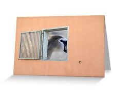 window with view Greeting Card