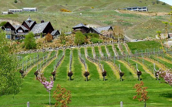 Divine Vines! - NZ - Southland by AndreaEL