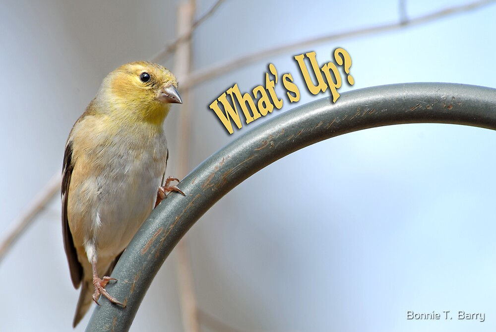 What's Up? by Bonnie T.  Barry