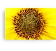 Natures Perfection - Sunflower - NZ Canvas Print