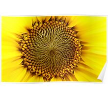 Natures Perfection - Sunflower - NZ Poster