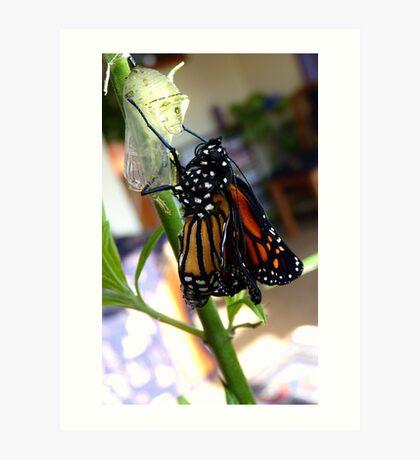 Walk The Line! - Monnarch Butterfly - NZ Art Print