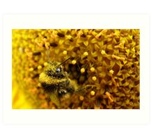 Bombus In A Sea Of Pollen! - Bumblebee On Sunflower - NZn Art Print