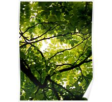 Robinia Poster